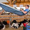 JAY YOUNG | THE GOSHEN NEWS<br /> Tanner Demien, of Goshen, relaxes in his hammock outside the cattle stalls at the Elkhart County 4-H Fair Monday afternoon.