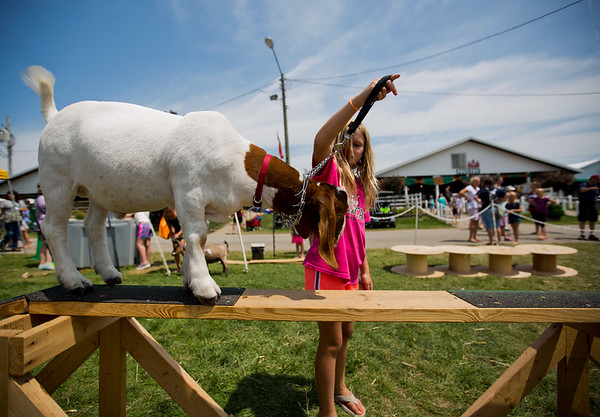 JAY YOUNG | THE GOSHEN NEWS<br /> Ten-year-old Addison Holmes, of Wakarusa, and her goat named Tank warm up before the start of the goat agility skills contest Wednesday afternoon at the Elkhart County 4-H Fair.