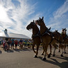 JAY YOUNG | THE GOSHEN NEWS<br /> Crowds line the road to watch a team of six draft horses pull a carriage Tuesday evening at the Elkhart County 4-H Fair.