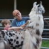 Tristan teaches younger 4-H'er how to groom a llama