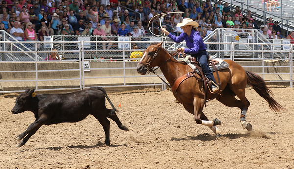 JAY YOUNG | THE GOSHEN NEWS<br /> A competitor chases down a calf during the calf roping event at the Friday afternoon rodeo at the Elkhart County 4-H Fair.