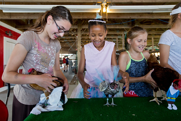 JAY YOUNG | THE GOSHEN NEWS<br /> From left, Hannah Scott, 13, of Elkhart, Larissa Chupp, 9, of Elkhart and Kiara Trovatore, 9, of Goshen, prepare their chickens for the poultry costume contest Tuesday afternoon in the poultry barn at the Elkhart County 4-H Fair.