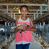 JAY YOUNG | THE GOSHEN NEWS<br /> Nine-year-old Larissa Chupp, of Elkhart, holds her Shimmer, her silver sebright chicken, Wednesday afternoon in the poultry barn at the Elkhart County 4-H Fair.