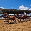 JAY YOUNG | THE GOSHEN NEWS<br /> A team of draft horses enters the arena to signal the start of the Friday afternoon rodeo at the Elkhart County 4-H Fair.