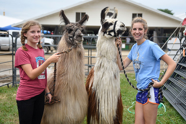 BEN MIKESELL | THE GOSHEN NEWS<br /> Annelise Green, 12, of New Paris and Halee Fisher, 17 of Millersburg with their llamas.