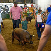 BEN MIKESELL | THE GOSHEN NEWS<br /> Hunter Lee, 4, and his dad Dalton Hinen of Millersburg participate in a swine show Thursday at the Elkhart County 4-H Fairgrounds.