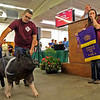 GEOFF LESAR | THE GOSHEN NEWS  Elkhart County 4-H Swine Grand Champion Courtney Lengacher, of Wakarusa, sheds tears as her pig parades around the auction floor Friday afternoon during the 4-H Swine Auction.