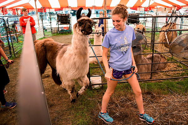 BEN MIKESELL   THE GOSHEN NEWS<br /> Halee Fisher, 17, of Millersburg, walks with Ulani, an 11-year-old heavy wool llama outside the 4-H Llama Club tent Monday at the Elkhart County 4-H Fair.