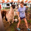 BEN MIKESELL | THE GOSHEN NEWS<br /> Halee Fisher, 17, of Millersburg, walks with Ulani, an 11-year-old heavy wool llama outside the 4-H Llama Club tent Monday at the Elkhart County 4-H Fair.