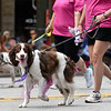BEN MIKESELL | THE GOSHEN NEWS<br /> Dogs representing Happy Tails walk down Main Street during the 2018 4-H Fair Parade Sunday in downtown Goshen.