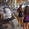 BEN MIKESELL | THE GOSHEN NEWS<br /> Fair-goers walk through the rabbit barn Tuesday afternoon at the Elkhart County 4-H Fair.