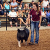 LIZ RIETH | THE GOSHEN NEWS Courtney Lengacher shows her champion barrow pig at the Parade of Champions Thursday.