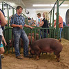 BEN MIKESELL | THE GOSHEN NEWS<br /> 4-H swine club members get ready to participate in a show Thursday afternoon at the Elkhart County 4-H Fairgrounds.