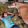 BEN MIKESELL | THE GOSHEN NEWS<br /> Former 10-year 4-H member Andrew Dowty, of Goshen, rests with some Guernsey cattles Friday afternoon while waiting for an oepn show at the Elkhart County 4-H Fair.
