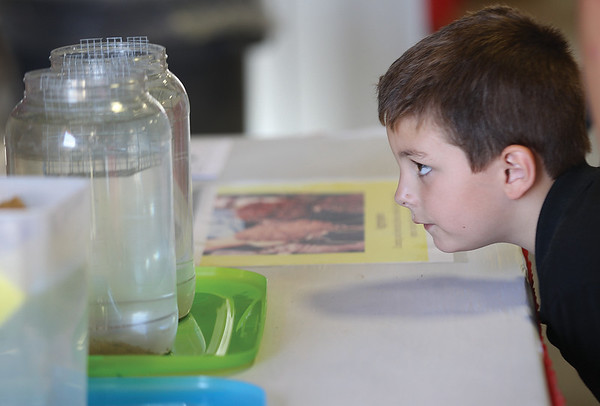 Jacen Silva, 6, who was viditing the area from Rhode Island, looks closely at a soil sample display