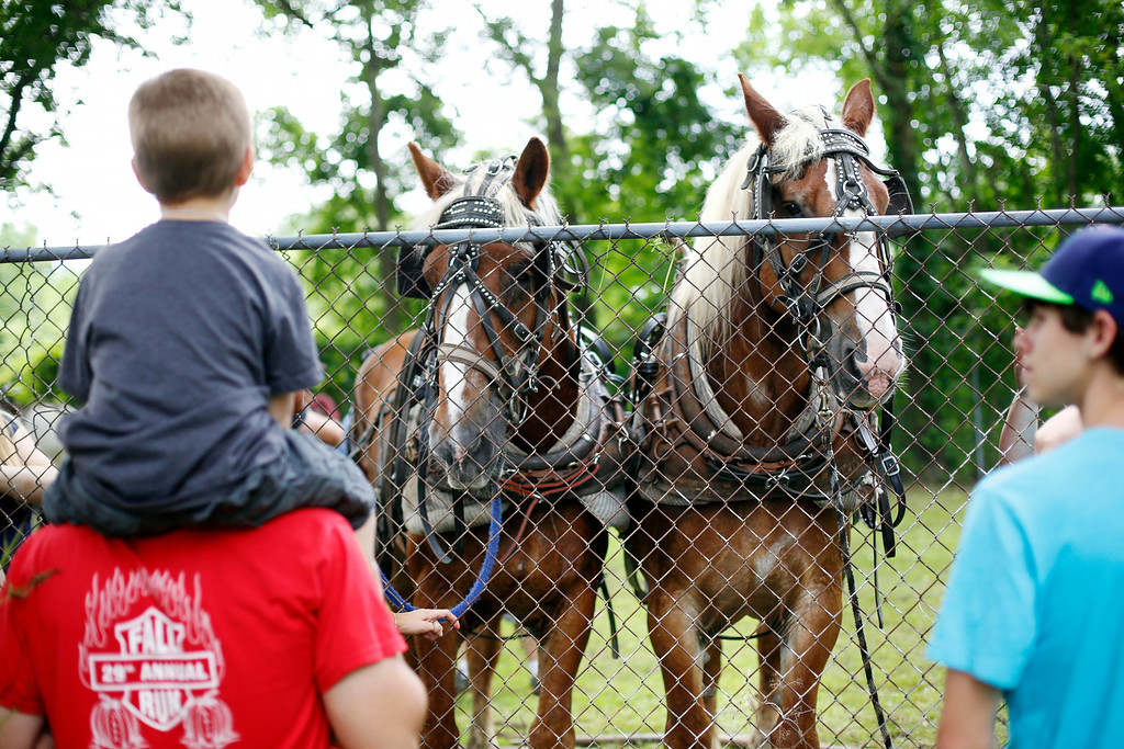 . Visitors check out the horses at the Adams Agricultural Fair. Saturday, August 2, 2014. Stephanie Zollshan / Berkshire Eagle Staff / photos.berkshireeagle.com