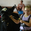 HALEY WARD | THE GOSHEN NEWS <br /> Caytlin Sherman, 9, shows her heifer Rain during the LaGrange County Fair on Monday. Sherman won Grand Champion.