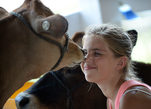 HALEY WARD | THE GOSHEN NEWS <br /> Katie Eash, 12, lets her calf Jane kiss her nose during the LaGrange County Fair on Monday. Eash will show her four cows Wednesday during the dairy competition.