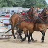 ADAM RANDALL | THE GOSHEN NEWS<br /> Two horses rumble through behind the Sale Barn Arena, Topeka, Tuesday during horse pull competitions.