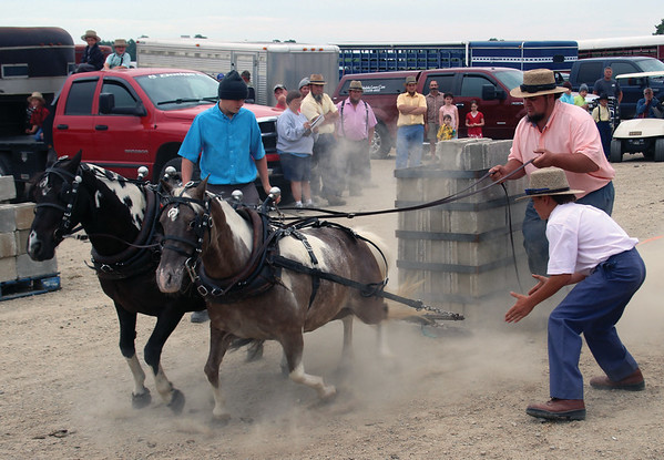 JOHN KLINE | THE GOSHEN NEWS<br /> Dust billows as the annual Miniature Pony Pull event kicks off at the Topeka Sale Barn Monday afternoon.