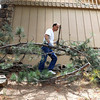 Boulder home owner, Anthony Campana, clears freshly cut pine branches away from his home in a fire mitigation effort near View Point Dr. and Cragmoor Rd in Boulder Wednesday afternoon as firefighters work on the nearby Flagstaff Fire.  Andy Cross, The Denver Post