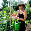 """Wendy Hoffenberg prepares swiss chard she picked at the Flatirons Neighborhood Farm in Boulder <br /> Photo by Paul Aiken  August 4, 2011.<br /> FOR MORE PHOTOS FROM THE FARM GO TO  <a href=""""http://WWW.DAILYCAMERA.COM"""">http://WWW.DAILYCAMERA.COM</a>"""
