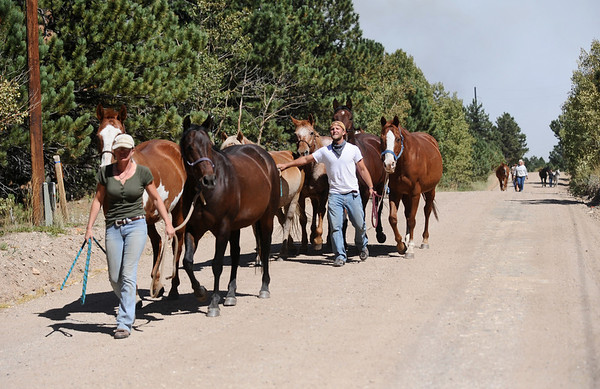 FOURMILE<br /> Stephanie Wendorf, left, and Tyler Stites walk horses down Gold Hill Road to a waiting trailer as they are evacuated from Colorado Mountain Ranch on Monday during the Fourmile Canyon fire. <br /> Photo by Marty Caivano/Camera/Sept.6, 2010