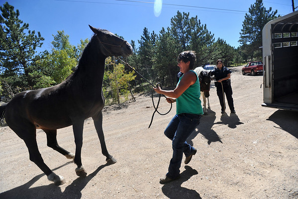 FOURMILE<br /> Cindy McCollum struggles to load a nervous horse while evacuating many animals from the Colorado Mountain Ranch above Gold Hill on Monday during the Four-Mile Canyon fire.<br /> Photo by Marty Caivano/Camera/Sept.6, 2010
