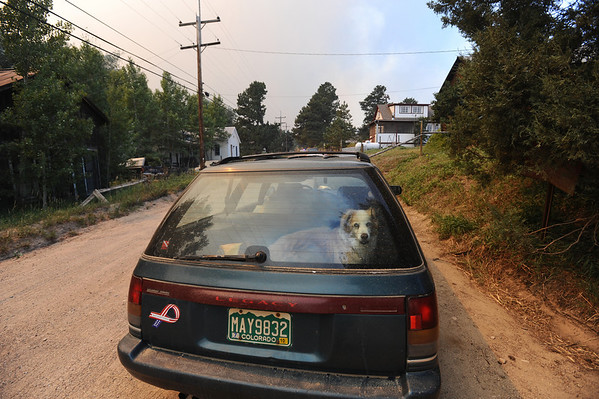 FOURMILE<br /> A dog waits in the back of a car as its owner prepares to evacuate from Gold Hill during the Fourmile Canyon fire on Monday.<br /> Photo by Marty Caivano/Camera/Sept.6, 2010