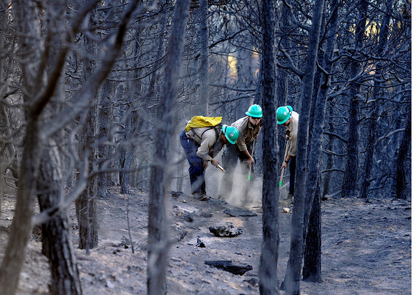 """Platte Canyon firefighters Mike Reese, left, Neil Thoreson, and Seth Humphreys work to put out a smoldering log in a burned forest on Saturday, Sept. 11, just west of Gold Hill. The firefighters were working to put out the Fourmile Canyon fire in Boulder.<br /> For more photos of the area go to  <a href=""""http://www.dailycamera.com"""">http://www.dailycamera.com</a><br /> Jeremy Papasso/ Camera"""