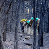 "Platte Canyon firefighters Mike Reese, left, Neil Thoreson, and Seth Humphreys work to put out a smoldering log in a burned forest on Saturday, Sept. 11, just west of Gold Hill. The firefighters were working to put out the Fourmile Canyon fire in Boulder.<br /> For more photos of the area go to  <a href=""http://www.dailycamera.com"">http://www.dailycamera.com</a><br /> Jeremy Papasso/ Camera"