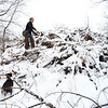 KRISTOPHER RADDER - BRATTLEBORO REFORMER<br /> Piper, a Jagdterrier and Jack Russell mix, searching a brush pile for rabbits during a hunt in Rutland on Jan. 19, 2018.