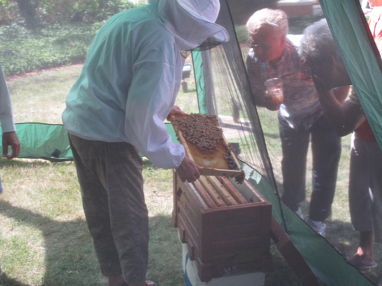 BOB FINNAN / GAZETTE Beekeeper Laurene Keil of Homeworth, Ohio, near Alliance, shows onlookers the queen bee in the hive from behind a tent Saturday in front of the Medina Library, 210 S. Broadway St.
