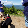 ELODIE REED - FOR THE BENNINGTON BANNER Keegan the dog hangs out at the top of Stratton Mountain after taking his first gondola ride with the Eschmann family Saturday. The Eschmanns, who live in Connecticut but own a house in Winhall, adopted Keegan two years ago.