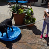 ELODIE REED - FOR THE BENNINGTON BANNER Morgan Dennes, 9, of Winhall, holds onto Matilda the dog as she splashed around Saturday.