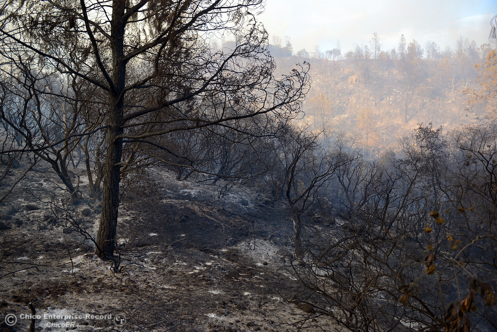 . The Swedes Fire burned along Swedes Flat Road, in the vicinity of Chinese Wall Road, just east or Oro Bangor Highway Friday, August 16, 2013 in Oroville, Calif. Over 200 acres were burned with at least one structure lost. (Jason Halley/Chico Enterprise-Record)