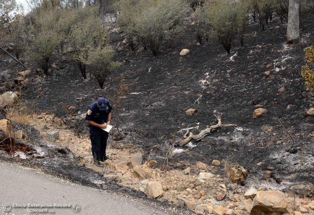 . Cal Fire-Butte County fire inspector Todd Price investigates for the cause of the fire in the charred ground along Swedes Flat Rd. near Chinese Wall Rd. as mandatory evacuation areas around the Swedes Fire southeast of Oroville were expanded just after noon Saturday, August 17, 2013 in Oroville, Calif.  (Jason Halley/Chico Enterprise-Record)