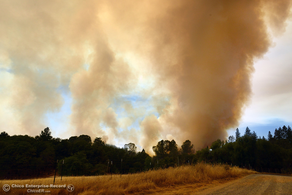 . Smoke rises in the forest west of Hurleton Swedes Flat Road in the mandatory evacuation areas around the Swedes Fire southeast of Oroville that were expanded just after noon Saturday, August 17, 2013 in Oroville, Calif.  (Jason Halley/Chico Enterprise-Record)