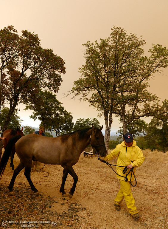 . North Valley Animal Disaster Group Maureen Milligh (right) transports the horse Mojo as she helps Jim Berglund (back) transport his horse Gretta from the mandatory evacuation areas around the Swedes Fire southeast of Oroville that were expanded just after noon Saturday, August 17, 2013 in Oroville, Calif.  (Jason Halley/Chico Enterprise-Record)