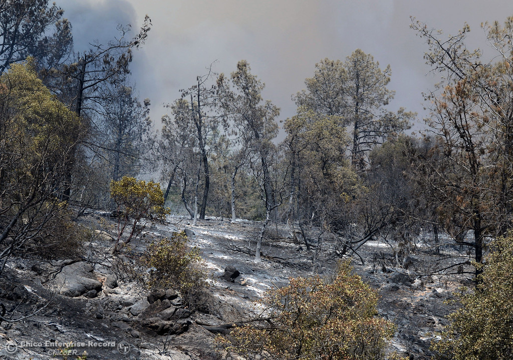 . Charred remains of the Swedes Fire can be seen along Swedes Flat Rd. as mandatory evacuation areas around the Swedes Fire southeast of Oroville were expanded just after noon Saturday, August 17, 2013 in Oroville, Calif.  (Jason Halley/Chico Enterprise-Record)