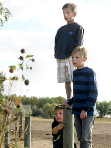 Will Paulson, 7, left, Bo Lafferty, 8, and Braxton Elsen, 10, watch as firefighters work to rescue a cow from a well on Friday, Oct. 7, at 12166 Jay Rd. in Erie. For more photos and video of the rescue go to www.dailycamera.com Jeremy Papasso/ Camera