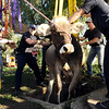 """Mountain View firefighter Stew Visser, center left, and farmer Keith Lafferty, center right, work to rescue a cow that fell into a well on Lafferty's property on Friday, Oct. 7, at 12166 Jay Rd. in Erie. For more photos and video of the rescue go to  <a href=""""http://www.dailycamera.com"""">http://www.dailycamera.com</a><br /> Jeremy Papasso/ Camera"""