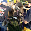 "Mountain View firefighters work to rescue a cow that had fallen into a well on Friday, Oct. 7, at 12166 Jay Rd. in Erie. For more photos and video of the rescue go to  <a href=""http://www.dailycamera.com"">http://www.dailycamera.com</a><br /> Jeremy Papasso/ Camera"