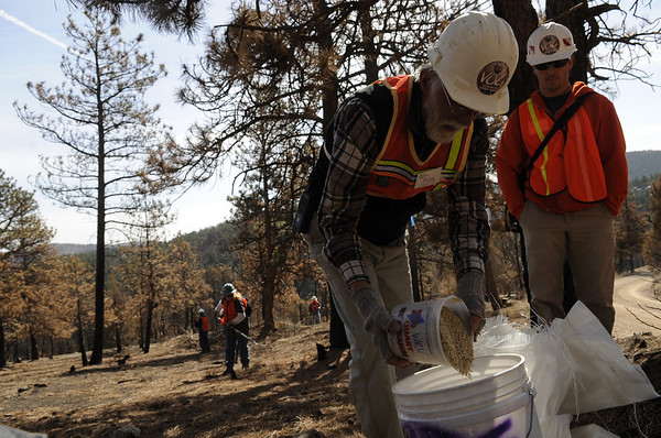 "Alan Carpenter, of Wildlands Restoration Volunteers, pours plant seed into a bucket on Saturday, March 19, during a volunteer seeding effort on Salina Mountain Rd. in the Fourmile Canyon area of Boulder. The volunteers are trying to re-grow the burned vegetation in the area caused by the Fourmile Canyon wildfire. For more photos go to  <a href=""http://www.dailycamera.com"">http://www.dailycamera.com</a><br /> Jeremy Papasso/ Camera"