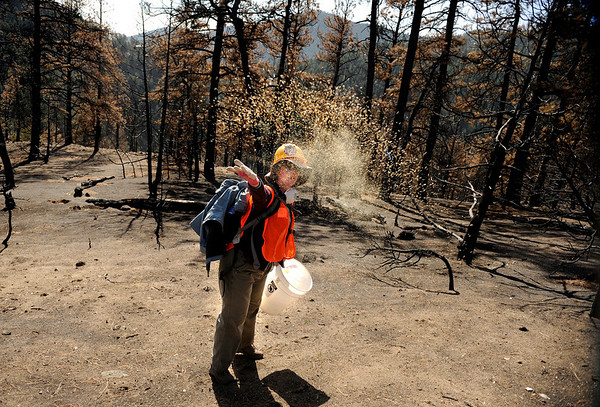 "Cathy Foley, of Broomfield, throws plant seed into the air on Saturday, March 19, during a volunteer seeding effort on Salina Mountain Rd. in the Fourmile Canyon area of Boulder. The volunteers are trying to re-grow the burned vegetation in the area caused by the Fourmile Canyon wildfire. For more photos go to  <a href=""http://www.dailycamera.com"">http://www.dailycamera.com</a><br /> Jeremy Papasso/ Camera"