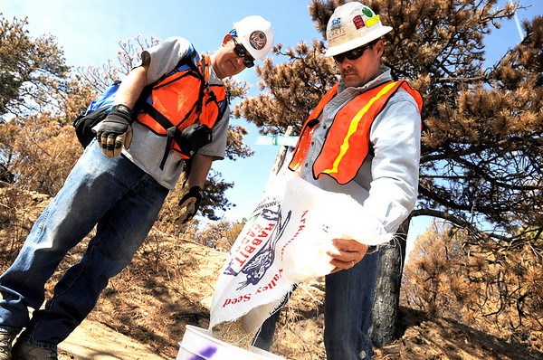 "Chris Westerhoff, of Westminster, right, pours plant seed into a volunteers bucket on Saturday, March 19, during a volunteer seeding effort on Salina Mountain Rd. in the Fourmile Canyon area of Boulder. The volunteers are trying to re-grow the burned vegetation in the area caused by the Fourmile Canyon wildfire. For more photos go to  <a href=""http://www.dailycamera.com"">http://www.dailycamera.com</a><br /> Jeremy Papasso/ Camera"