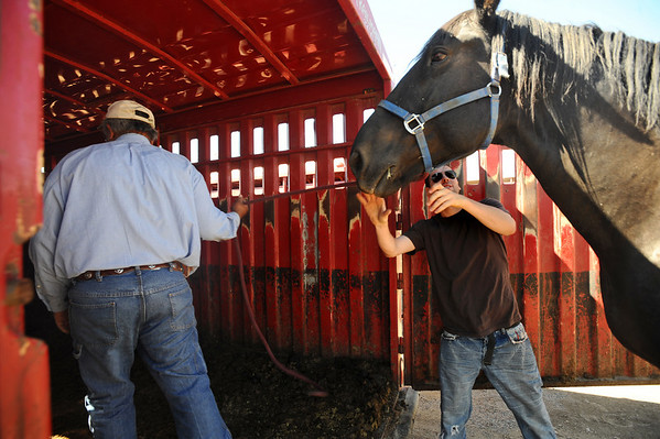 HORSES<br /> Shawn Felix, left, and Garrett Kramer load horses from the Colorado Mountain Ranch onto a trailer at the Boulder County Fairgrounds in Longmont. The animals were evacuated from the fire area above Gold Hill on Monday, and now are being moved to winter pasture.<br /> Photo by Marty Caivano/Camera/Sept. 9, 2010