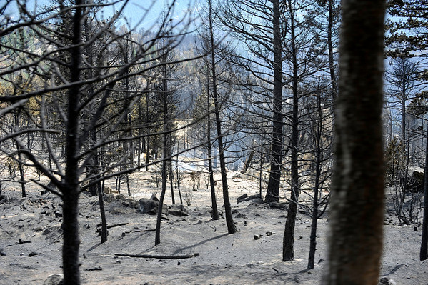 Ash and smoke are abundant in the Fourmile fire near Gold Hill, Colorado September 9, 2010.  Over 100 homes and structures have been destroyed since Monday. CAMERA/Mark Leffingwell (POOL)