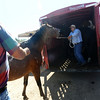 HORSES<br /> Shawn  Felix, right, pulls a horse from the Colorado Mountain Ranch onto a trailer with the help of Dan Lisco at the Boulder County Fairgrounds in Longmont. The animals were evacuated from the fire area above Gold Hill on Monday, and now are being moved to winter pasture.<br /> Photo by Marty Caivano/Camera/Sept. 9, 2010
