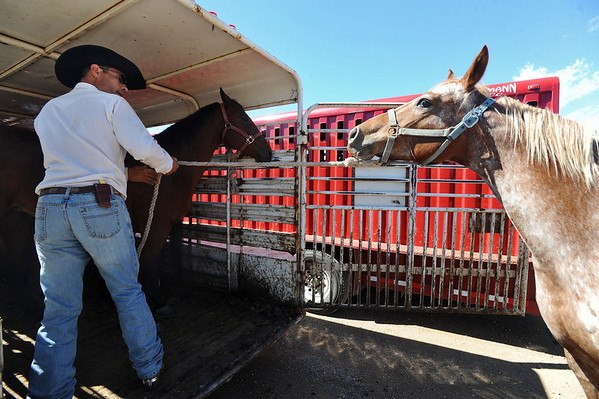 HORSES<br /> Ed Pinkard coaxes a horse from the Colorado Mountain Ranch onto a trailer at the Boulder County Fairgrounds in Longmont. The animals were evacuated from the fire area above Gold Hill on Monday, and now are being moved to winter pasture.<br /> Photo by Marty Caivano/Camera/Sept. 9, 2010